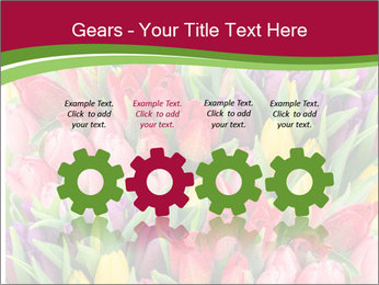 Bouquet of multicolor tulips PowerPoint Template - Slide 48