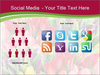 Bouquet of multicolor tulips PowerPoint Template - Slide 5
