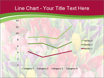 Bouquet of multicolor tulips PowerPoint Template - Slide 54