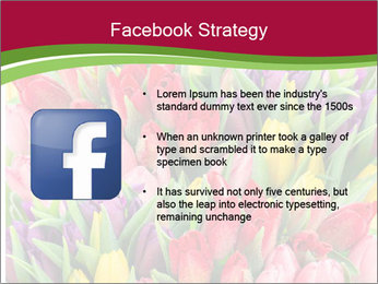Bouquet of multicolor tulips PowerPoint Template - Slide 6