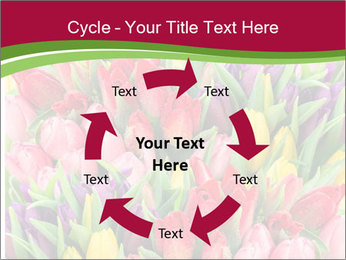 Bouquet of multicolor tulips PowerPoint Template - Slide 62