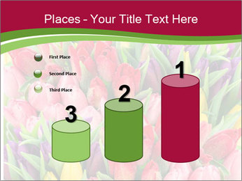 Bouquet of multicolor tulips PowerPoint Template - Slide 65