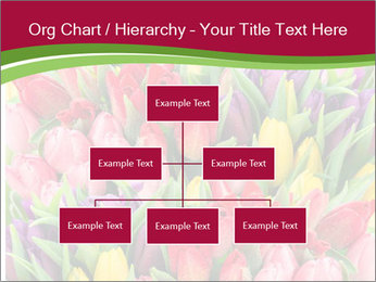 Bouquet of multicolor tulips PowerPoint Template - Slide 66