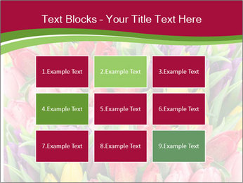 Bouquet of multicolor tulips PowerPoint Template - Slide 68
