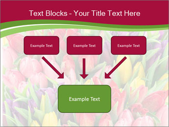 Bouquet of multicolor tulips PowerPoint Template - Slide 70