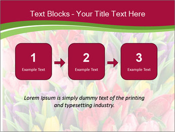 Bouquet of multicolor tulips PowerPoint Template - Slide 71