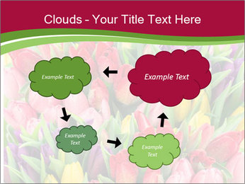 Bouquet of multicolor tulips PowerPoint Template - Slide 72