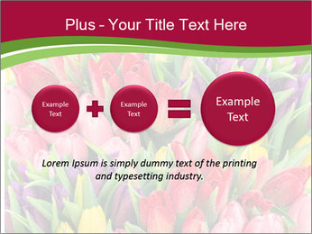 Bouquet of multicolor tulips PowerPoint Template - Slide 75