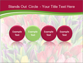 Bouquet of multicolor tulips PowerPoint Template - Slide 76