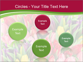 Bouquet of multicolor tulips PowerPoint Template - Slide 77
