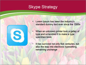 Bouquet of multicolor tulips PowerPoint Template - Slide 8