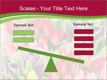 Bouquet of multicolor tulips PowerPoint Template - Slide 89