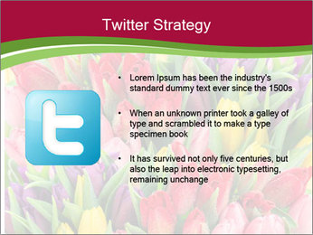 Bouquet of multicolor tulips PowerPoint Template - Slide 9
