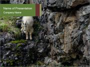 Mountain Goat on Cliff PowerPoint Templates
