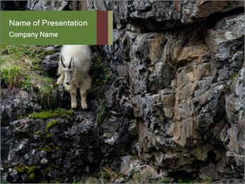 Mountain Goat on Cliff PowerPoint Template - Slide 1