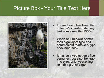 Mountain Goat on Cliff PowerPoint Template - Slide 13