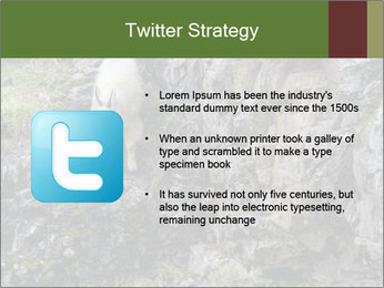 Mountain Goat on Cliff PowerPoint Template - Slide 9