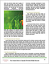 0000094035 Word Templates - Page 4
