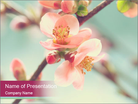 Spring blossom macro PowerPoint Template