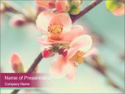Spring blossom macro PowerPoint Templates