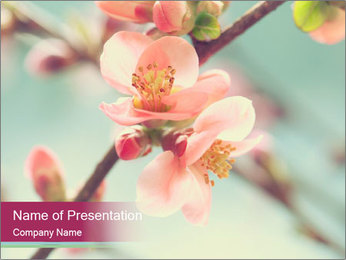 Spring blossom macro PowerPoint Template - Slide 1