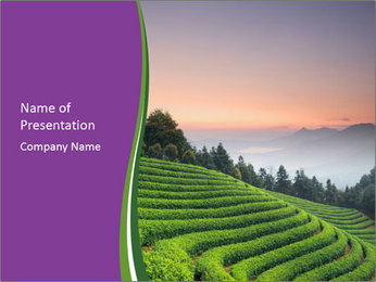 Tea Plantations PowerPoint Templates - Slide 1
