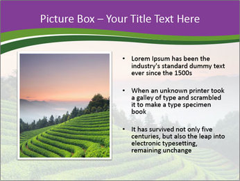 Tea Plantations PowerPoint Templates - Slide 13