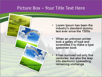 Tea Plantations PowerPoint Template - Slide 17