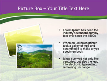 Tea Plantations PowerPoint Templates - Slide 20