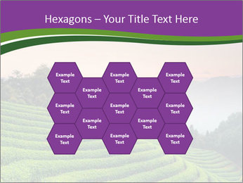 Tea Plantations PowerPoint Templates - Slide 44