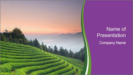 Tea Plantations PowerPoint Template