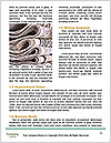 0000094160 Word Template - Page 4