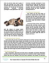 0000094240 Word Templates - Page 4