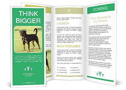 0000094259 Brochure Template