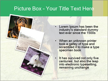 0000094259 PowerPoint Templates - Slide 17