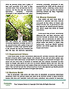 0000094304 Word Templates - Page 4