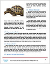 0000094310 Word Templates - Page 4