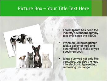 Barking dog PowerPoint Template - Slide 20