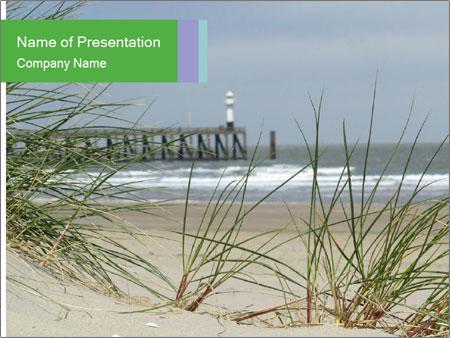 Marram Grass growing PowerPoint Templates