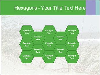 Marram Grass growing PowerPoint Templates - Slide 44