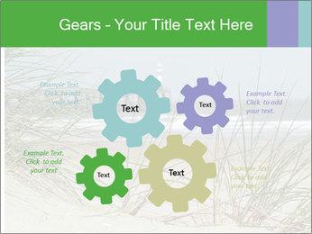 Marram Grass growing PowerPoint Templates - Slide 47