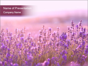 Lavender flowers PowerPoint Templates - Slide 1