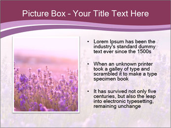 Lavender flowers PowerPoint Templates - Slide 13
