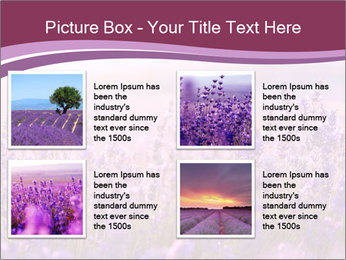 Lavender flowers PowerPoint Templates - Slide 14