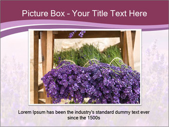 Lavender flowers PowerPoint Templates - Slide 15