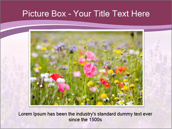 Lavender flowers PowerPoint Templates - Slide 16