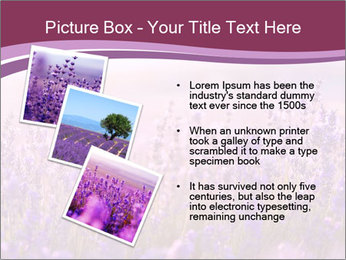 Lavender flowers PowerPoint Templates - Slide 17