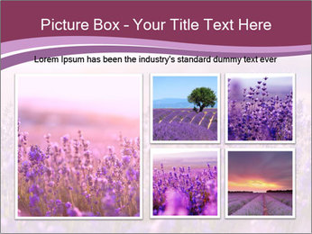 Lavender flowers PowerPoint Templates - Slide 19