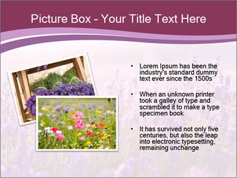 Lavender flowers PowerPoint Templates - Slide 20