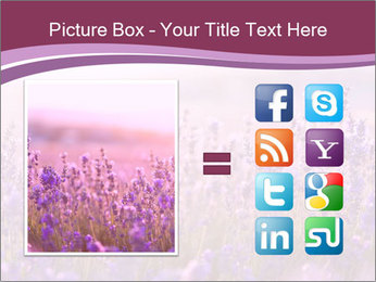 Lavender flowers PowerPoint Templates - Slide 21